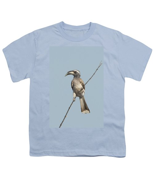 African Grey Hornbill Tockus Nasutus Youth T-Shirt by Panoramic Images