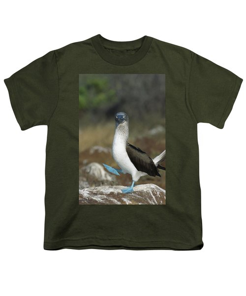 Blue-footed Booby Courtship Dance Youth T-Shirt by Tui De Roy