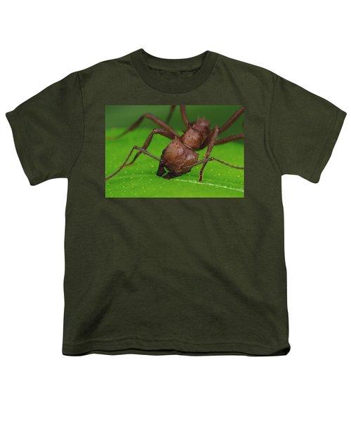 Leafcutter Ant Cutting Papaya Leaf Youth T-Shirt by Mark Moffett