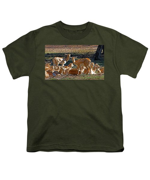 Blackbuck Female And Fawns Youth T-Shirt