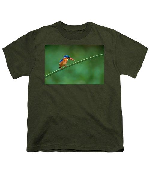 Malachite Kingfisher Tanzania Africa Youth T-Shirt by Panoramic Images