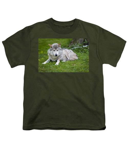 Youth T-Shirt featuring the photograph Mexican Gray Wolf by Sebastian Musial