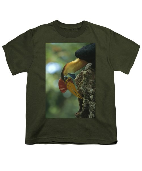 Sulawesi Red-knobbed Hornbill Male Youth T-Shirt by Tui De Roy