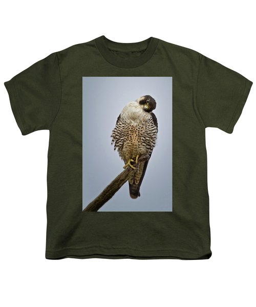 Falcon With Cocked Head Youth T-Shirt