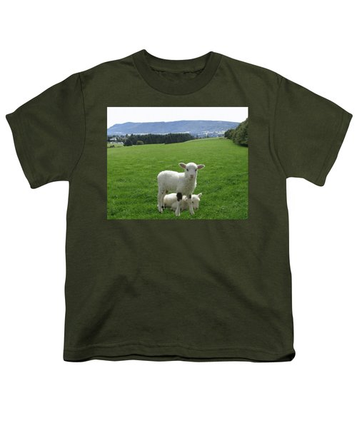 Lambs In Pasture Youth T-Shirt by Dominic Yannarella