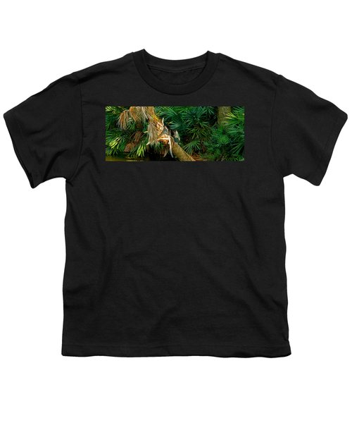 Anhinga Anhinga Anhinga On A Tree Youth T-Shirt by Panoramic Images