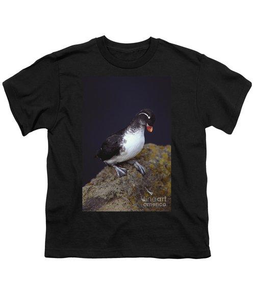 Parakeet Auklet Youth T-Shirt