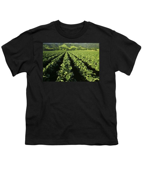 Agriculture - Mid Growth Cauliflower Youth T-Shirt by Ed Young