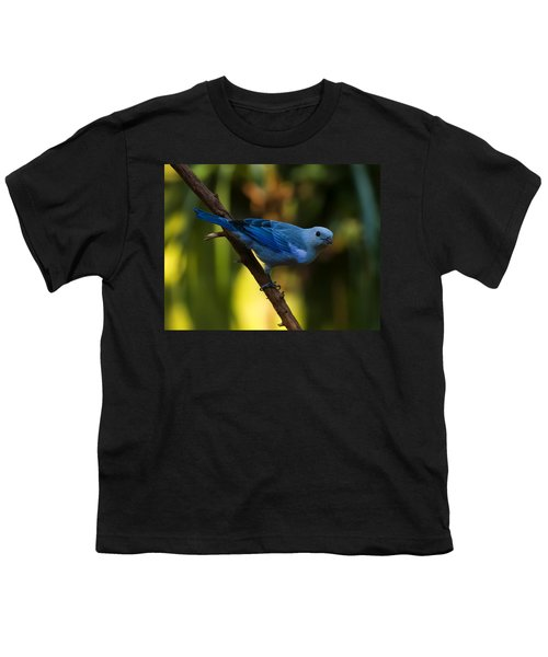 Blue Grey Tanager Youth T-Shirt