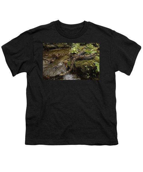 Boa Constrictor Crossing Stream Youth T-Shirt by Pete Oxford