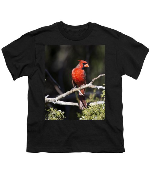 Male Northern Cardinal Youth T-Shirt