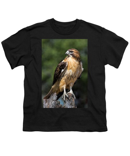 Red Tail Hawk Portrait Youth T-Shirt