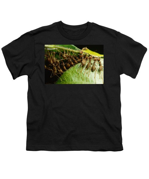 Weaver Ant Group Binding Leaves Youth T-Shirt by Mark Moffett