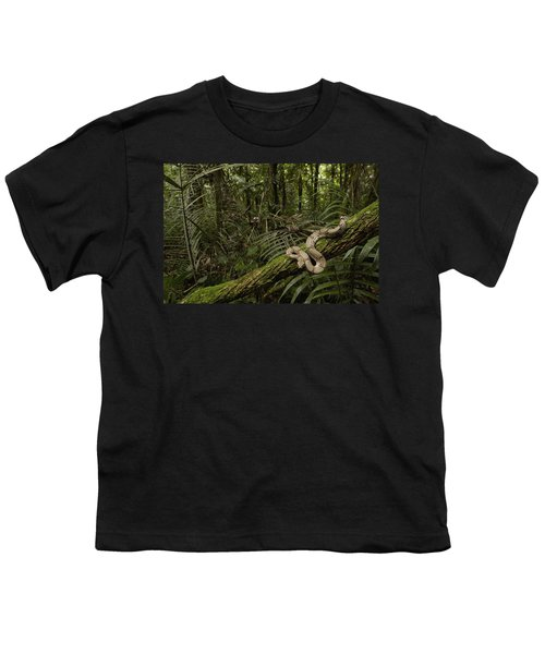 Boa Constrictor Boa Constrictor Coiled Youth T-Shirt