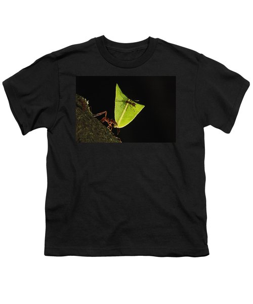Leafcutter Ant Atta Sp Carrying Leaf Youth T-Shirt by Cyril Ruoso