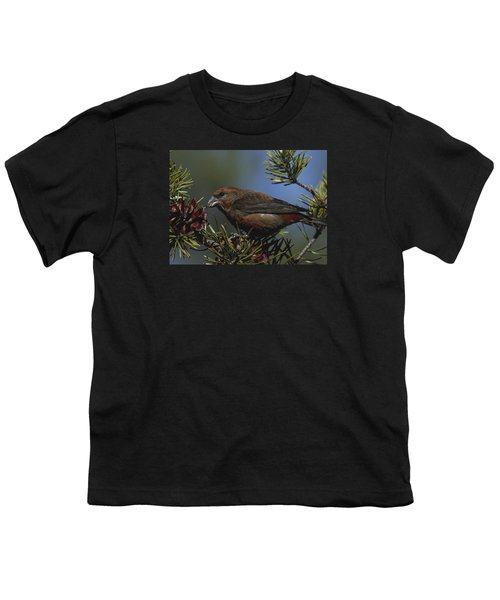 Red Crossbill Feeds On Pine Cone Seeds Youth T-Shirt