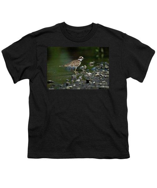 Killdeer  Youth T-Shirt by Douglas Stucky