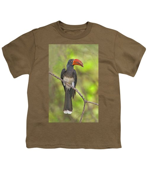 Crowned Hornbill Perching On A Branch Youth T-Shirt by Panoramic Images
