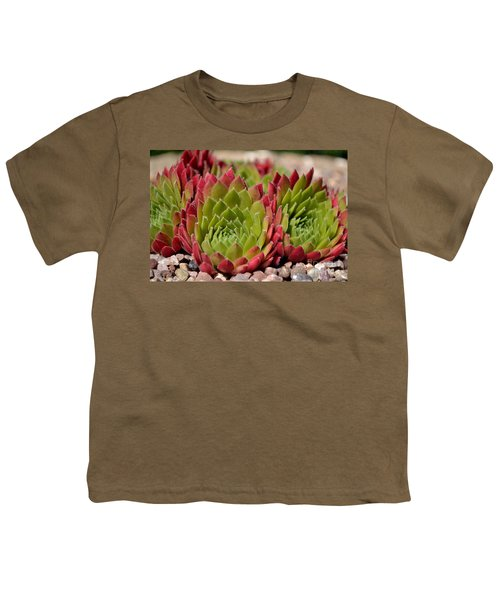 Houseleeks Aka Sempervivum From The Side Youth T-Shirt