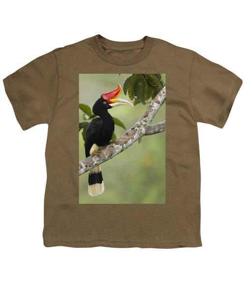 Rhinoceros Hornbill Female Sepilok Youth T-Shirt by Sebastian Kennerknecht