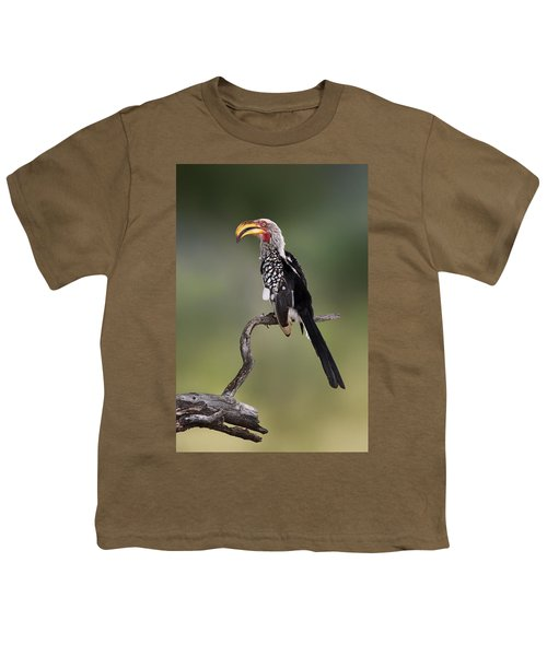 Southern Yellowbilled Hornbill Youth T-Shirt by Johan Swanepoel