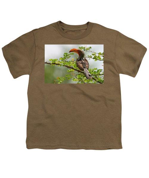 Yellow-billed Hornbill Youth T-Shirt
