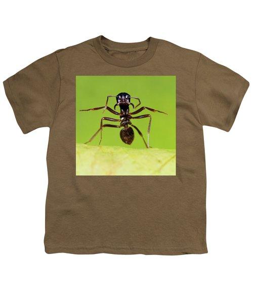 Japanese Slave-making Ant Polyergus Youth T-Shirt by Satoshi Kuribayashi