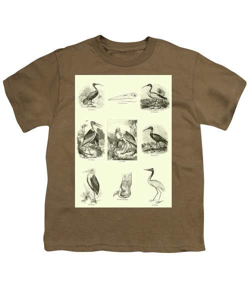 Page From The Pictorial Museum Of Animated Nature  Youth T-Shirt by English School