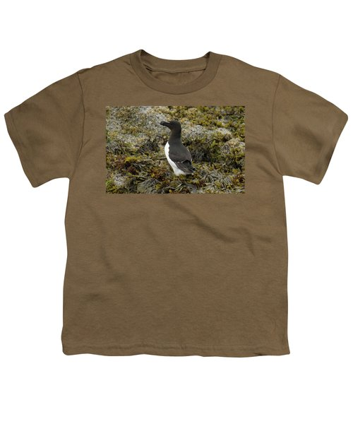 Razorbill Youth T-Shirt by Judd Nathan