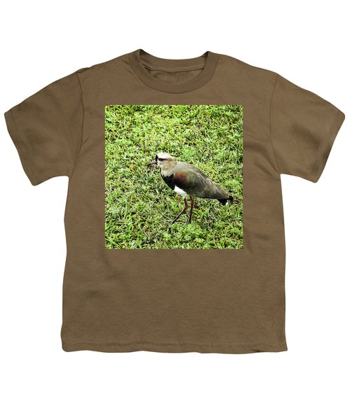 Southern Lapwing Youth T-Shirt by Norman Johnson