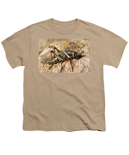 A Colorful Lubber Grasshopper Youth T-Shirt by Jack Goldfarb