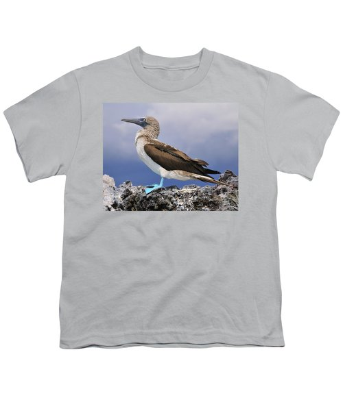 Blue-footed Booby Youth T-Shirt by Tony Beck