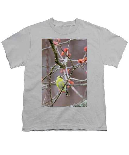 Youth T-Shirt featuring the photograph Molting Gold Finch by Bill Wakeley