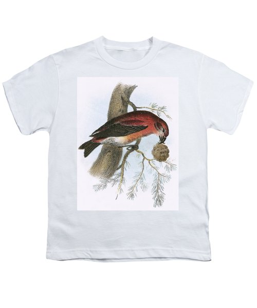 Crossbill Youth T-Shirt by English School