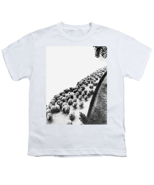 Hyde Park Sheep Flock Youth T-Shirt