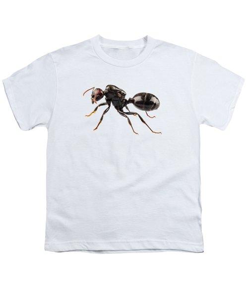 Black Garden Ant Species Lasius Niger Youth T-Shirt