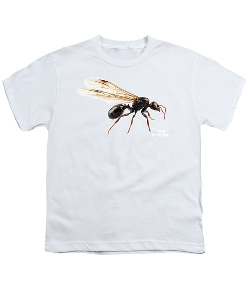 Black Winged Garden Ant Species Niger Lasius Youth T-Shirt