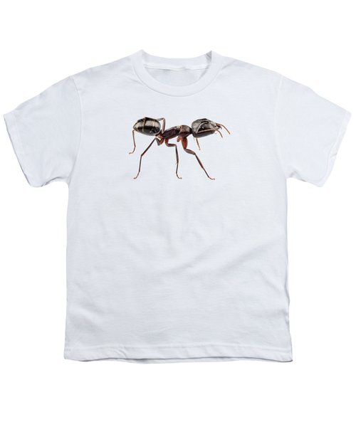 Carpenter Ant Species Camponotus Vagus Youth T-Shirt