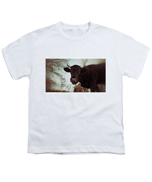 #cattle #kuh #rind #weide #herbst Youth T-Shirt