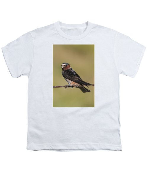 Youth T-Shirt featuring the photograph Cliff Swallow by Gary Lengyel