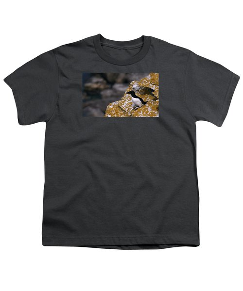Razorbill Bird Youth T-Shirt by Dreamland Media