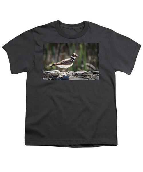 The Killdeer Youth T-Shirt by Robert Bales