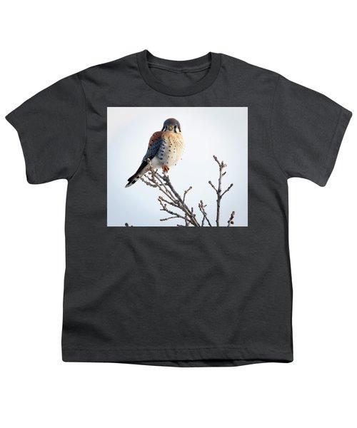 American Kestrel At Bender Youth T-Shirt