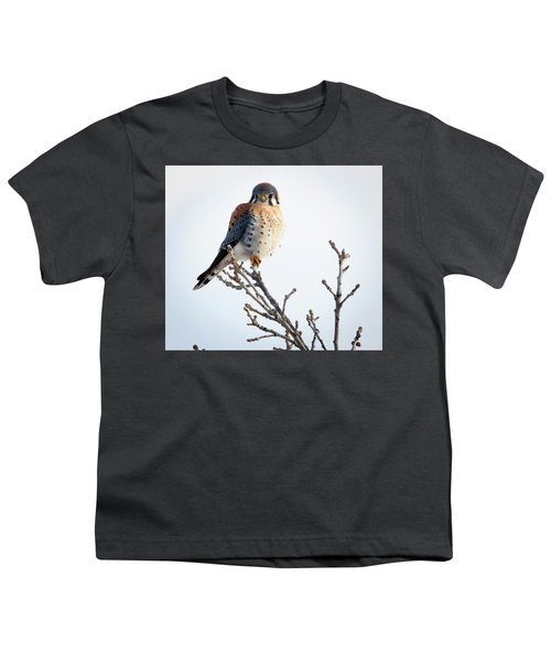 American Kestrel At Bender Youth T-Shirt