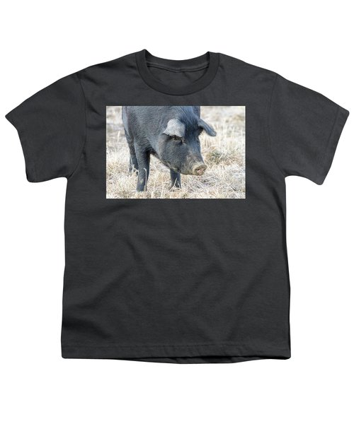 Youth T-Shirt featuring the photograph Black Pig Close-up by James BO Insogna