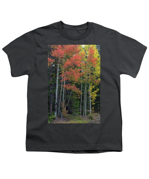 Youth T-Shirt featuring the photograph Rocky Mountain Forest Reds by James BO Insogna