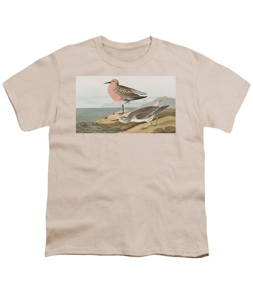 Red-breasted Sandpiper  Youth T-Shirt by John James Audubon