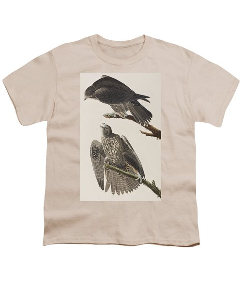 Labrador Falcon Youth T-Shirt by John James Audubon