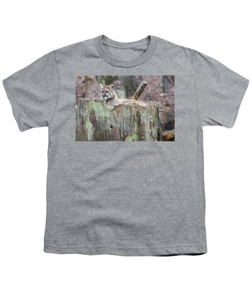 Cougar On A Stump Youth T-Shirt