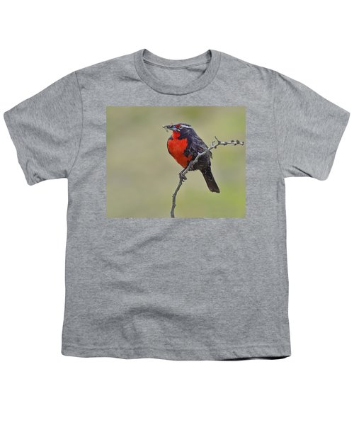 Long-tailed Meadowlark Youth T-Shirt by Tony Beck